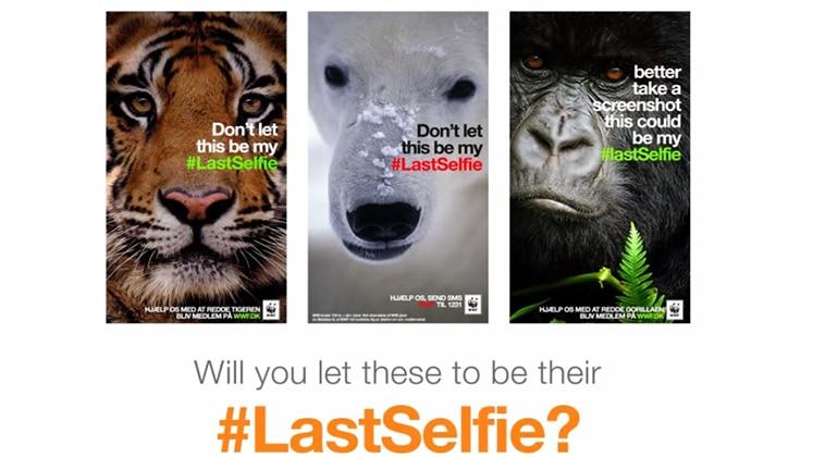 Préférence Le selfie au service de la protection des animaux | ARTGO média MY37